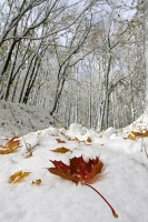 Neve in autunno